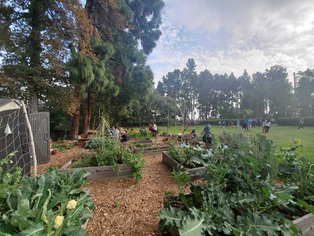 The Dig garden, including vegetable plants in the foreground and a lawn and trees in the background.